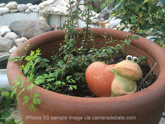 rog in a flower pot
